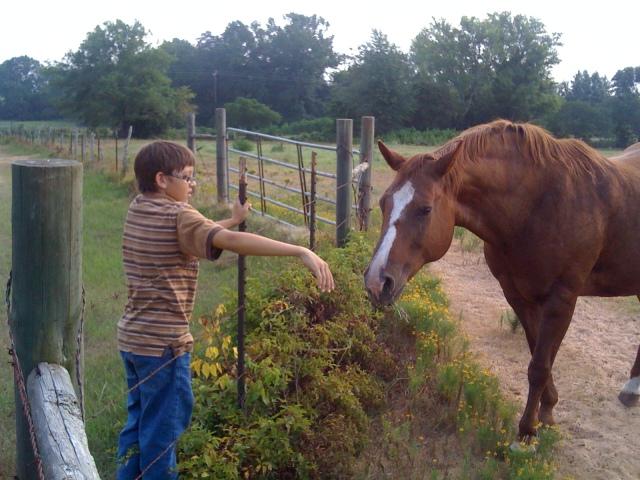 Emma's horses