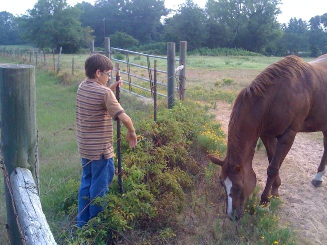 Horse and cowboy